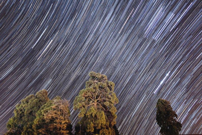 Cielo nocturno con el startrail y árboles abajo en invierno en Darjeeling La India imágenes de archivo libres de regalías