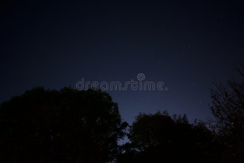 Cielo nocturno con resplandor de la luz de la ciudad sobre los árboles de la silueta imagen de archivo