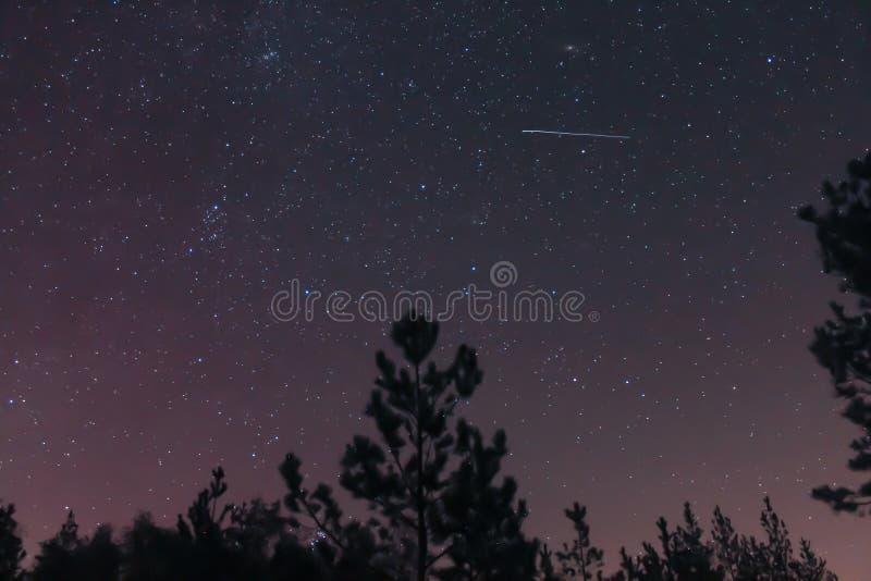 Cielo nocturno del bosque y una estrella fugaz imagen de archivo libre de regalías