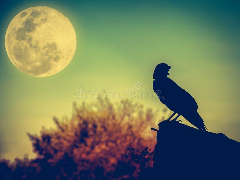 Cielo notturno con il ofcrow della luna piena, dell'albero e della siluetta che può essere fotografia stock libera da diritti