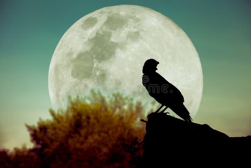 Cielo notturno con la luna piena, l'albero e la siluetta del corvo che può b immagini stock libere da diritti