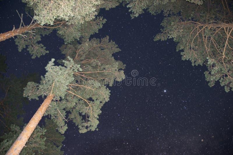 Cielo notturno con le stelle e gli alberi che allungano al cielo fotografia stock libera da diritti