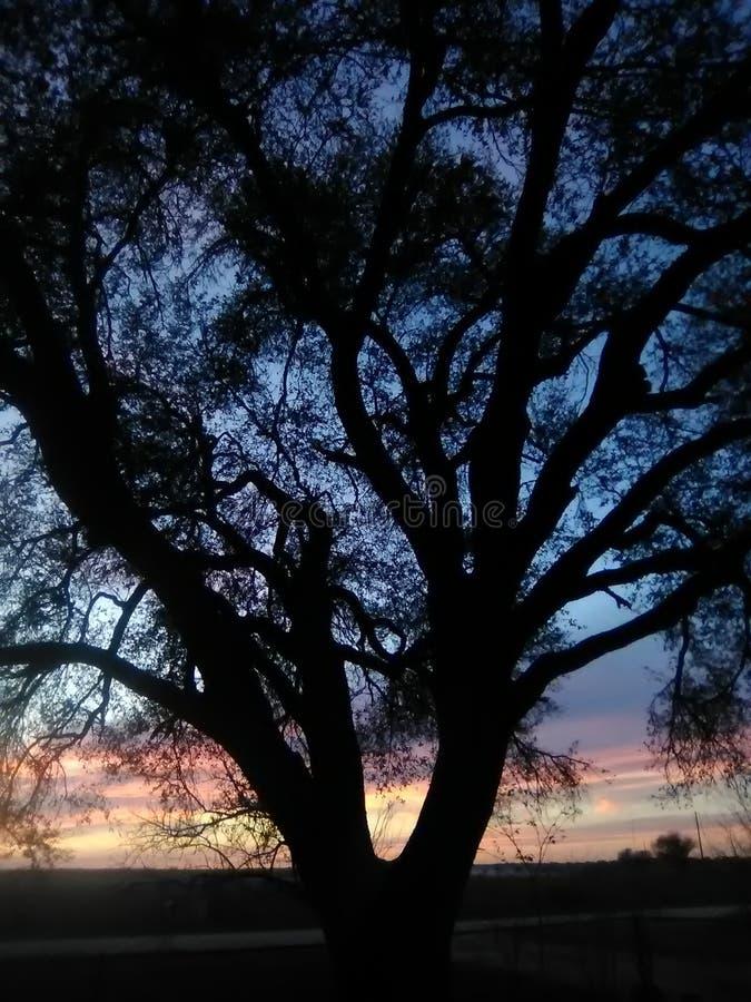 Cielo notturno del Texas immagini stock libere da diritti