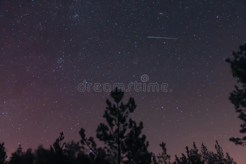 Cielo notturno della foresta e una stella cadente immagine stock libera da diritti