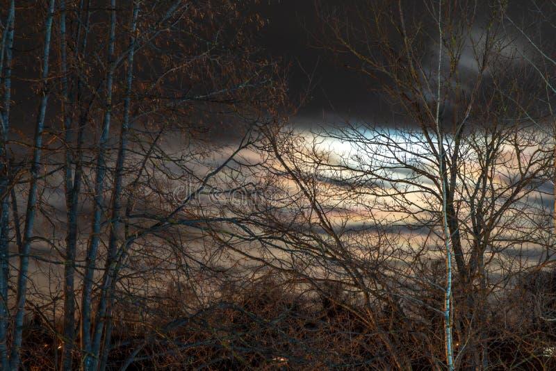 Cielo notturno e luna attraverso i rami di albero immagini stock