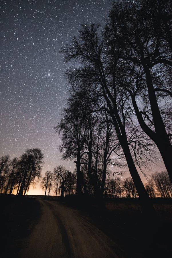 Cielo notturno sopra la strada della ghiaia e le siluette degli alberi fotografia stock