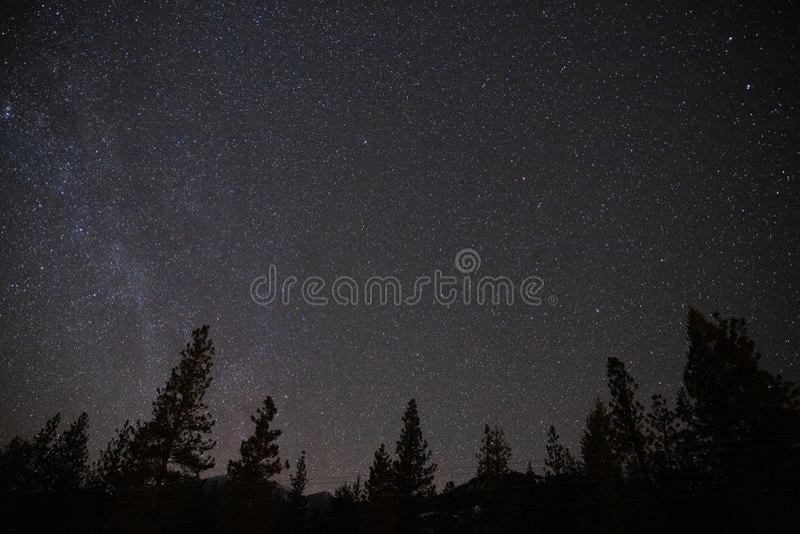 Cielo notturno stellato di astrofotografia con la foresta ed alberi profilati fotografia stock