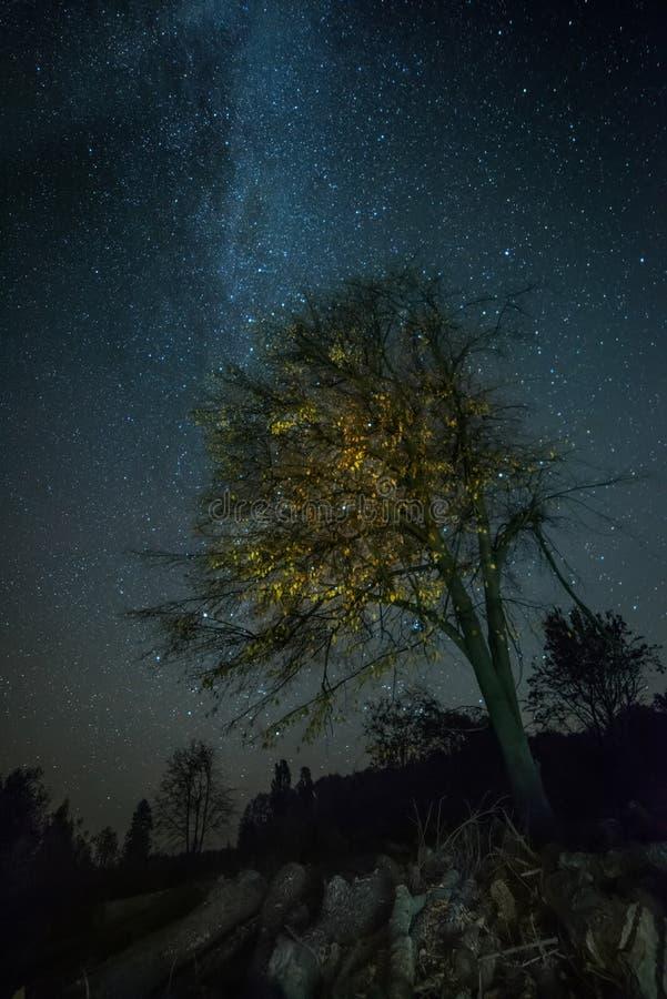 Cielo notturno stellato ed albero con le foglie gialle Notte nella campagna fotografia stock