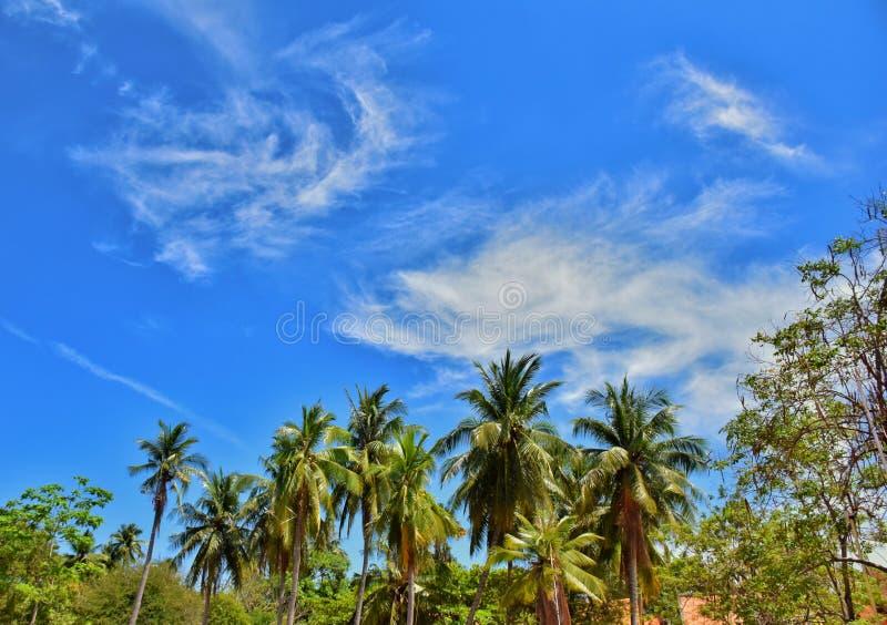 Cielo, nube y el árbol imágenes de archivo libres de regalías