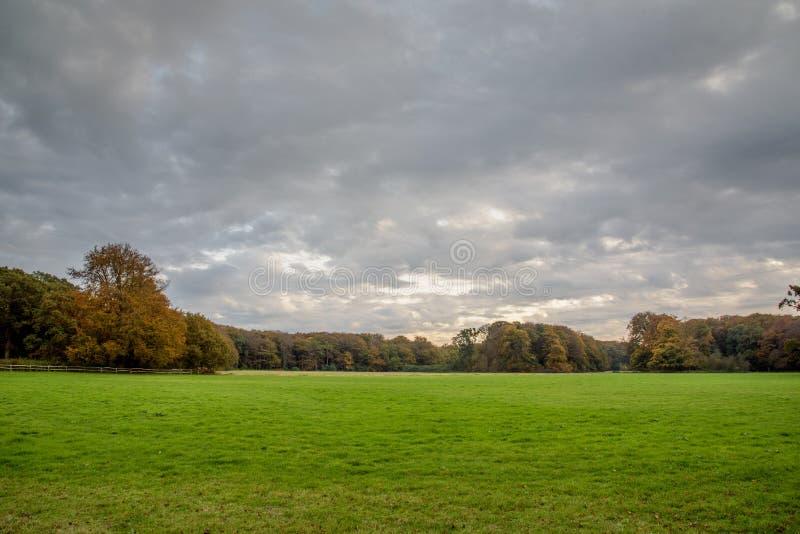 Cielo nublado gris sobre campo verde y automn más forrest fotografía de archivo libre de regalías