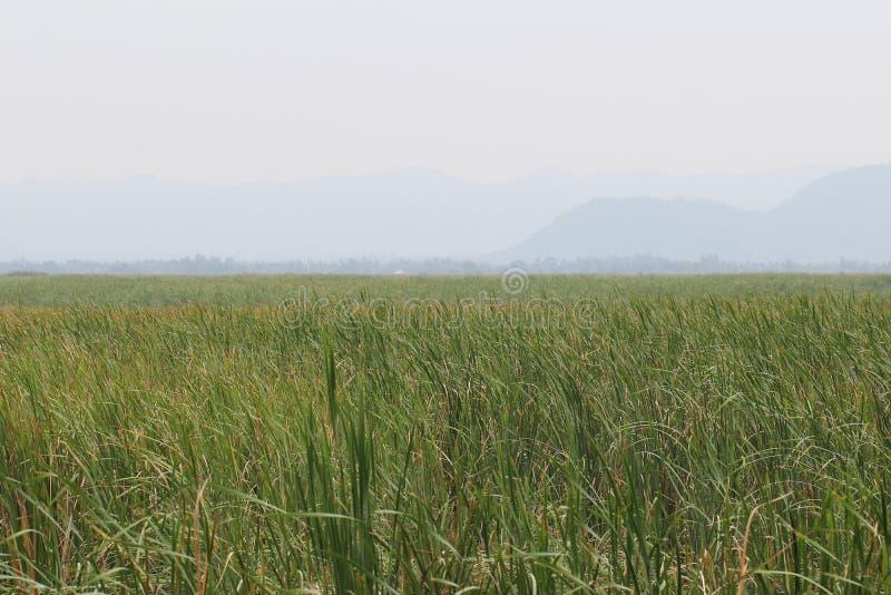 Cielo nublado y refugio entre fondos verdes de la hierba de la naturaleza adentro temprano de la estación de verano, situación pa fotos de archivo