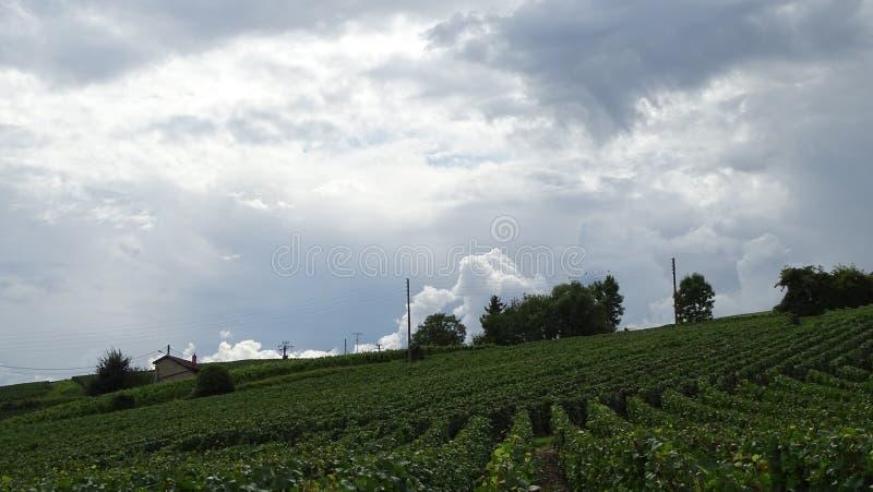 Cielo nuvoloso sulle vigne fotografie stock libere da diritti