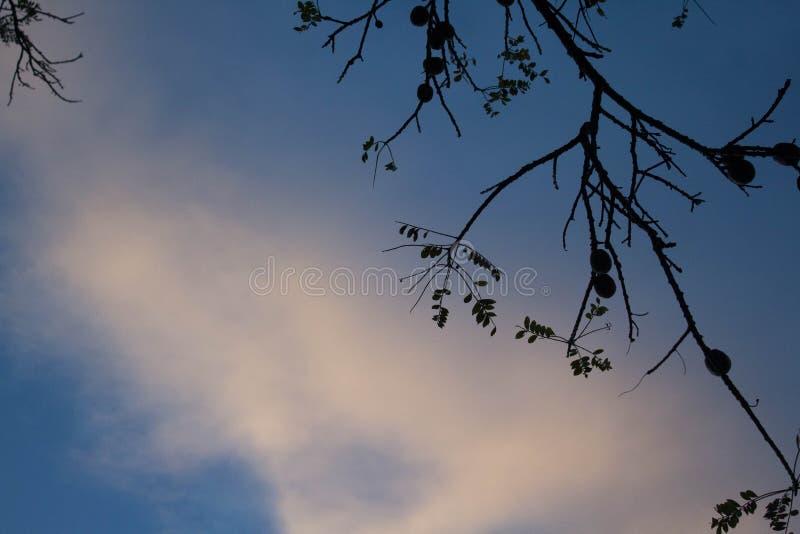 Cielo, rami ed ombre immagine stock
