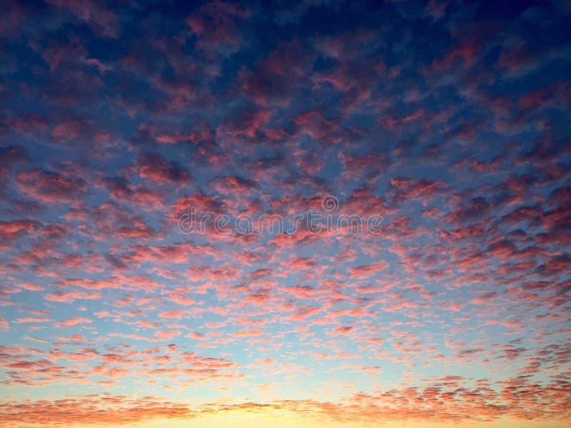 Cielo rojo del leopardo fotografía de archivo libre de regalías