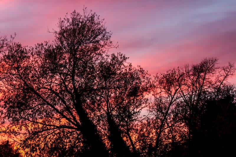 Cielo rosso attraverso gli alberi fotografie stock