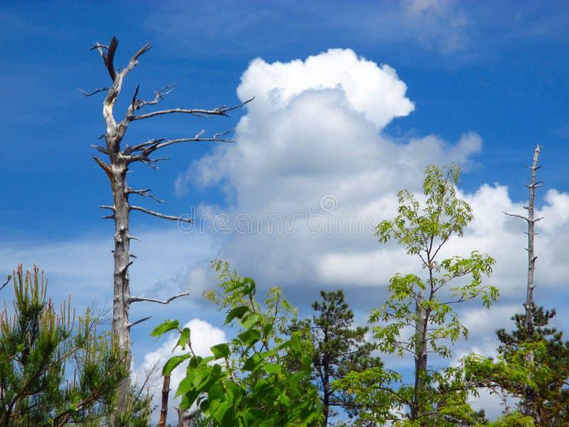 Cielo sobre la garganta de Linville imagen de archivo libre de regalías