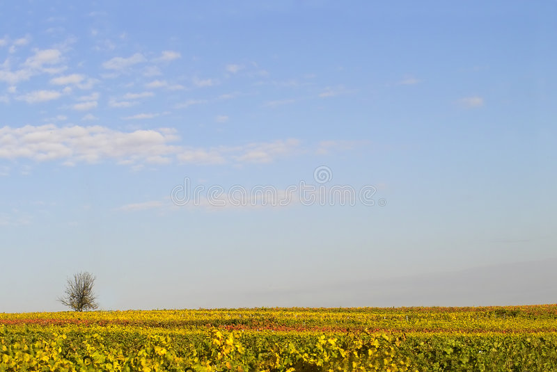 Cielo sopra i wineyards fotografia stock