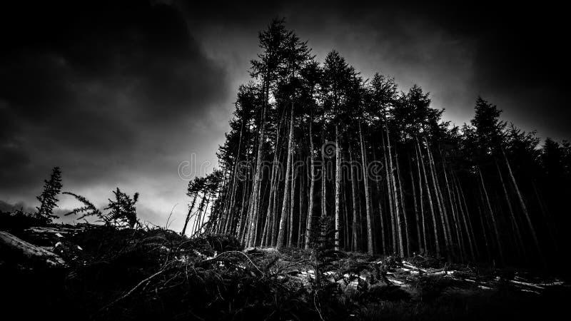 Cielo spettrale di Forest At Dusk Under Cloudy immagini stock libere da diritti