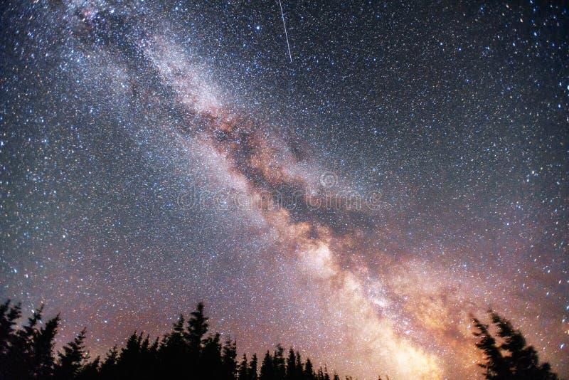 Cielo stellato attraverso gli alberi fotografia stock