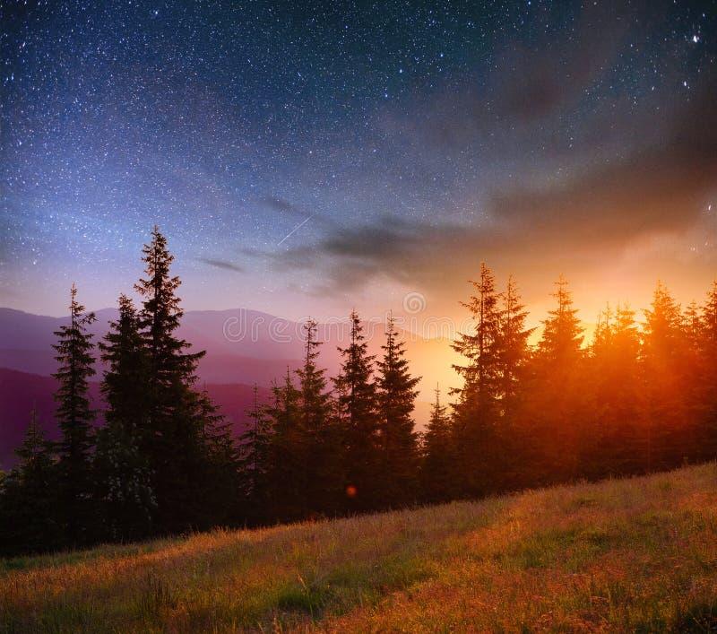 Cielo stellato fantastico e la Via Lattea sopra i culmini dei pini fotografia stock libera da diritti