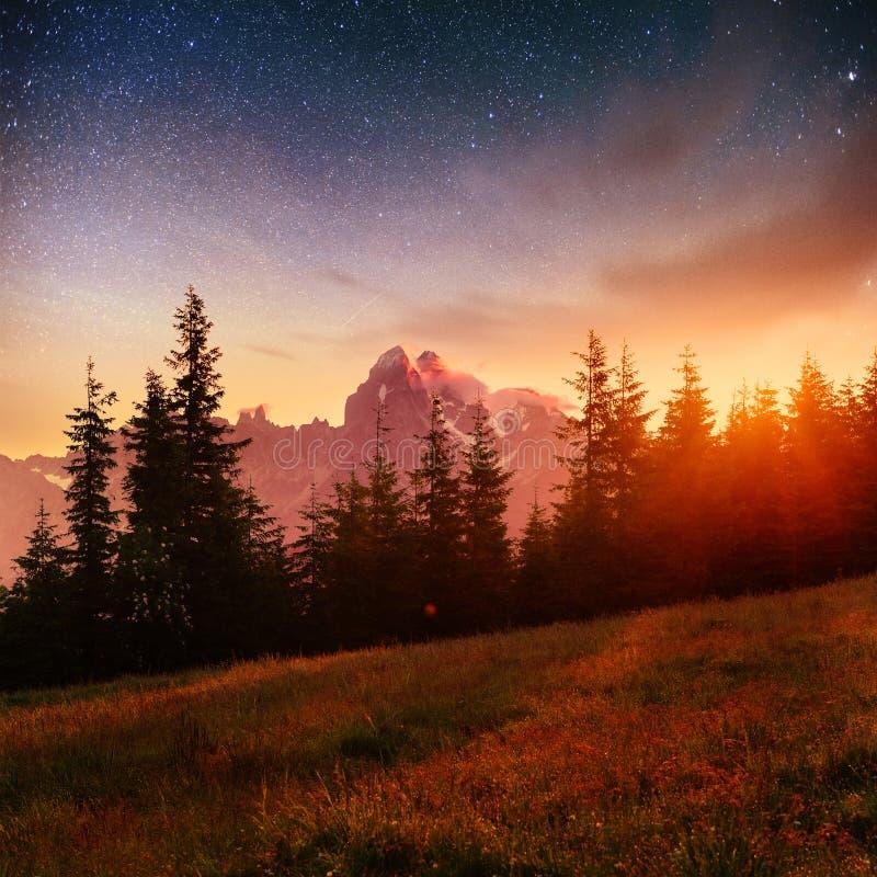 Cielo stellato fantastico e la Via Lattea sopra i culmini dei pini immagine stock libera da diritti