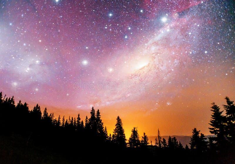 Cielo stellato fantastico e la Via Lattea sopra i culmini dei pini Cortesia della NASA fotografia stock libera da diritti