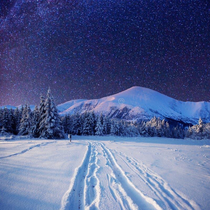 Cielo stellato nella notte nevosa di inverno fotografia stock libera da diritti