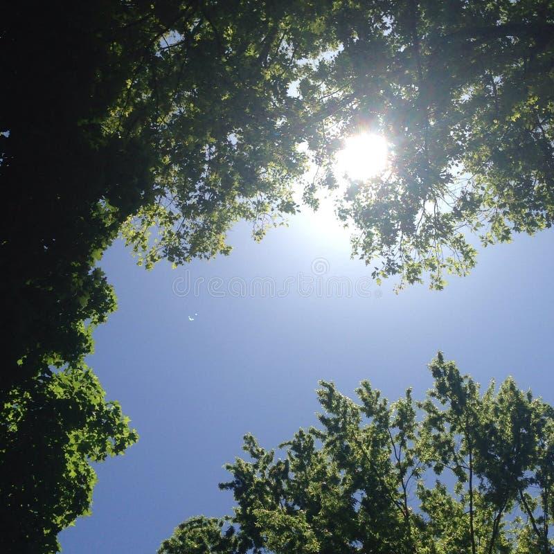 Cielo a través de árboles foto de archivo