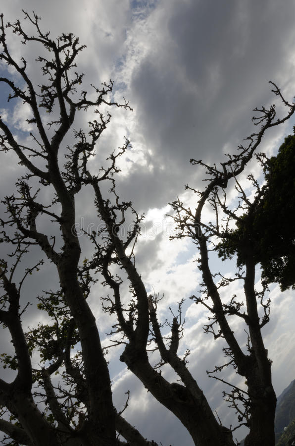 Cielo a través de árboles fotografía de archivo