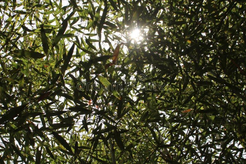 Cielo a través de árboles imagenes de archivo