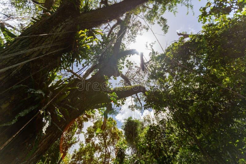 Cielo a través del toldo de la copa foto de archivo libre de regalías