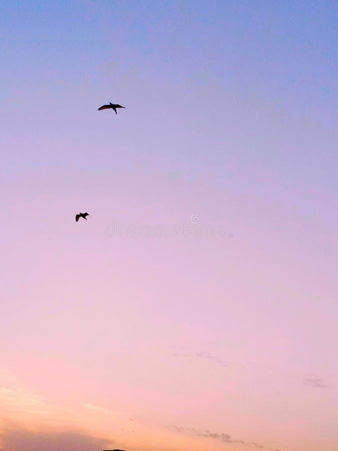 cielo uccelli fotografie stock