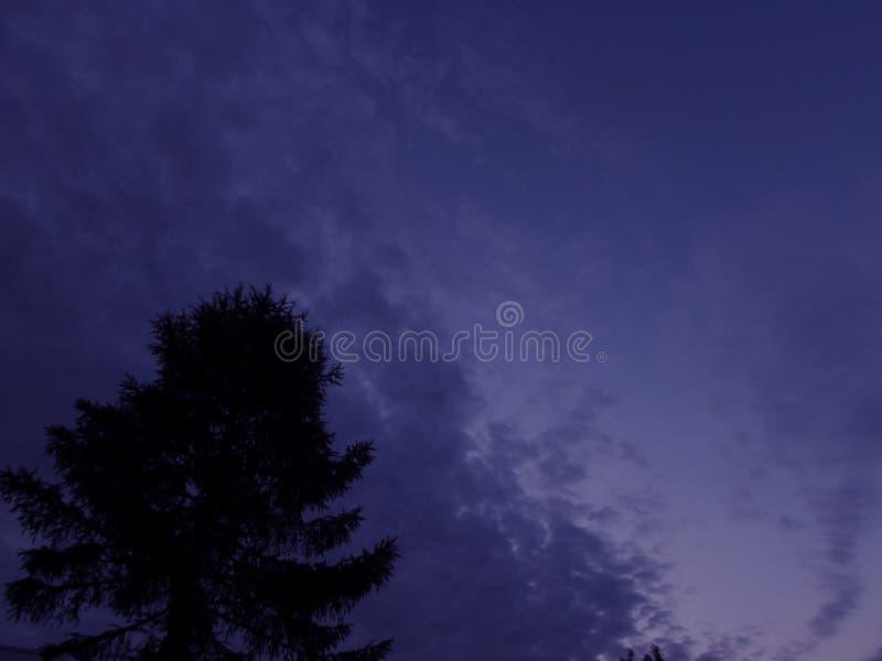 Cielo uguagliante blu scuro con le nuvole ed il profilo nero di una siluetta del pino nell'angolo sinistro più basso fotografie stock libere da diritti