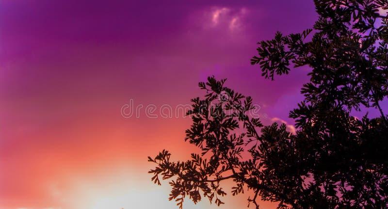 Cielo variopinto e nuvole di tramonto con la siluetta di un albero immagini stock
