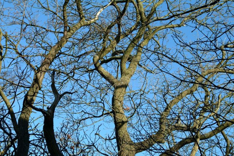 Cielo Y árboles - Escocia De Los Inviernos Foto de archivo libre de regalías