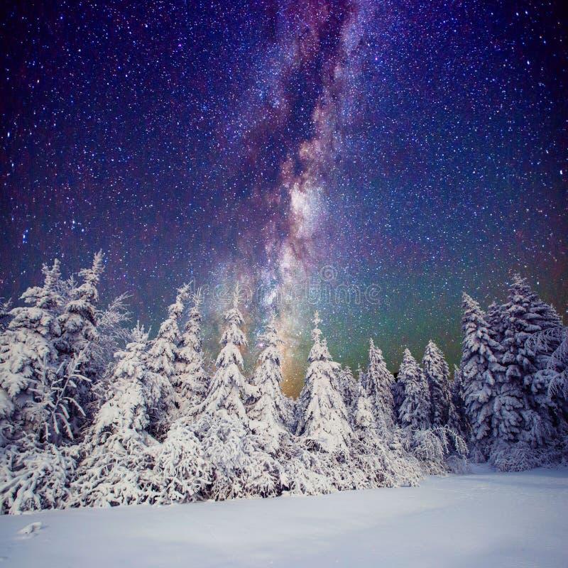 Cielo y árboles estrellados en la escarcha Cárpatos, Ucrania, Europa imagen de archivo