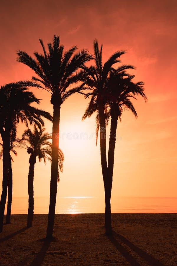 Cielo y silueta ardiendo de palmeras foto de archivo