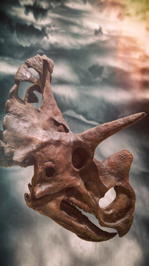 Cielos de la oscuridad del cráneo del fósil de dinosaurio del Triceratops imagenes de archivo