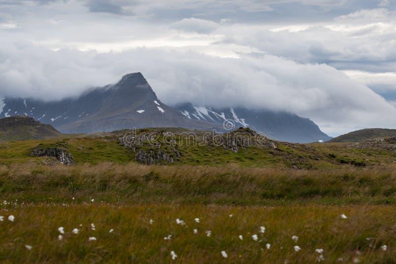 Cielos islandeses cambiantes, montañas, flores fotografía de archivo libre de regalías