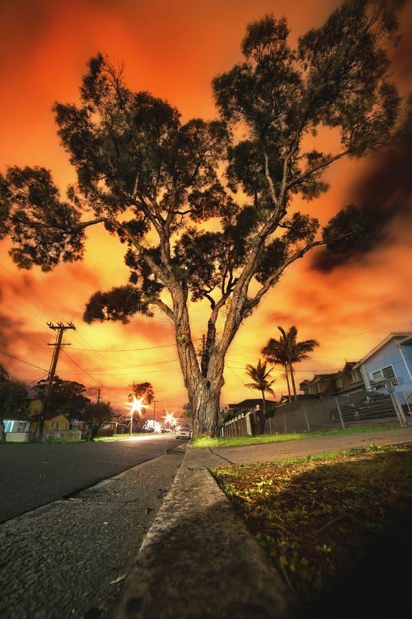 Cielos rojos sobre árbol de goma australiano imagen de archivo