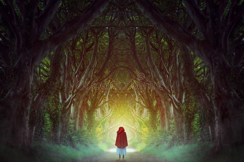 ciemna lasowa droga