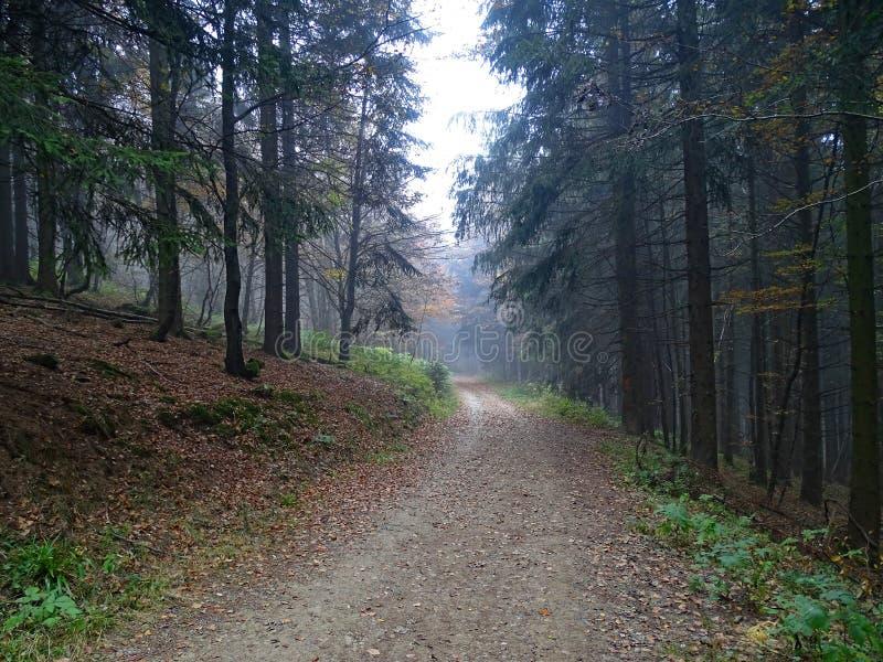 Ciemna lasowa droga w Sauerland, Niemcy obrazy royalty free