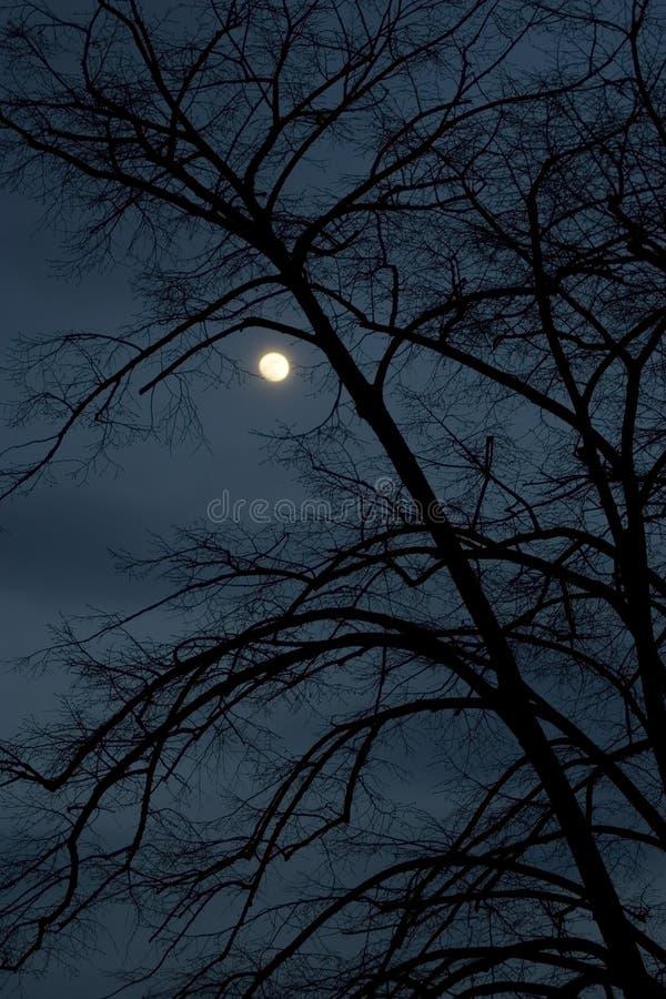 ciemna noc zdjęcia royalty free