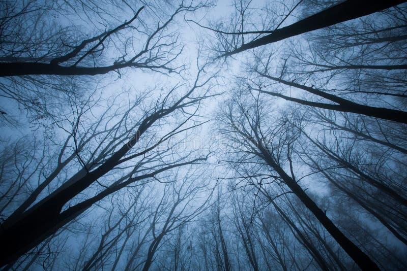 Ciemna scena z drzewem nakrywa ending obrazy royalty free