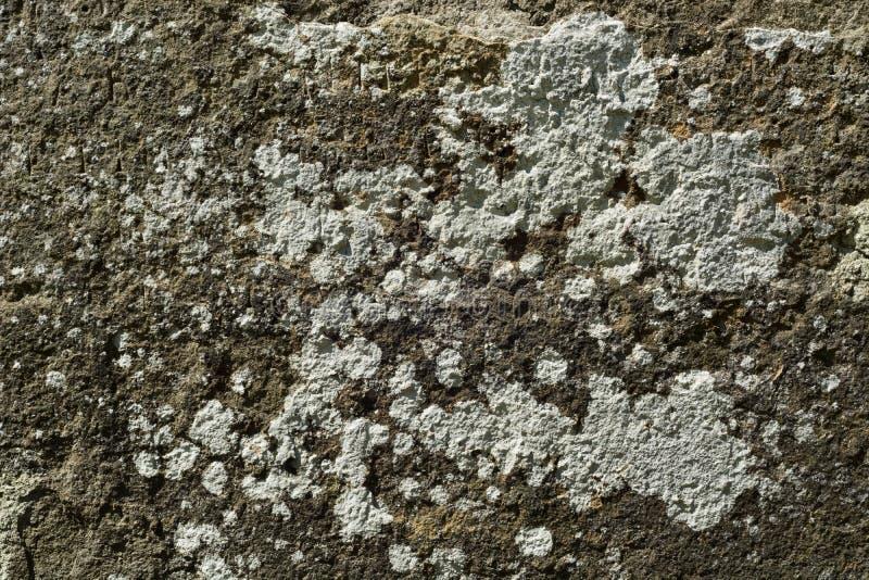 Ciemna stara kamień powierzchnia zakrywająca z łatami bielu liszaj obrazy stock