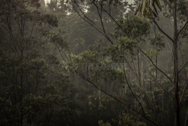 Ciemna tropikalna dżungla tropikalnego lasu deszczowego sceneria podczas tropikalnego deszczu zdjęcie stock