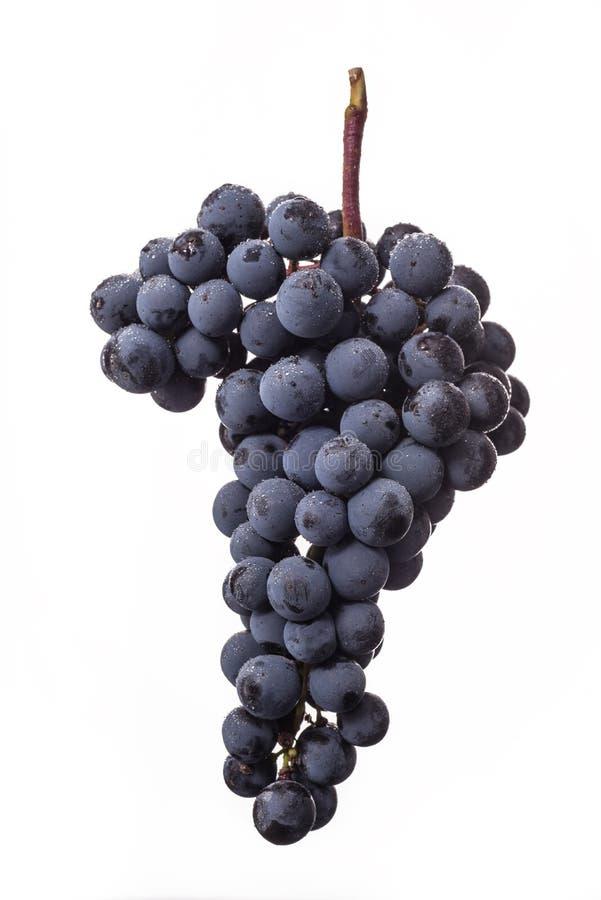 Ciemna wiązka winogrono w niskim świetle na białym odosobnionym tle, makro- strzał, woda opuszcza fotografia royalty free