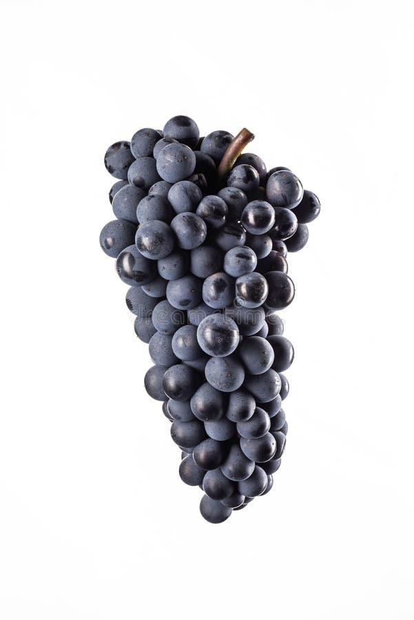 Ciemna wiązka winogrono w niskim świetle na białym odosobnionym tle, makro- strzał, woda opuszcza zdjęcia stock