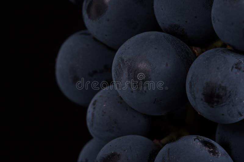 Ciemna wiązka winogrono w niskim świetle na czarnym odosobnionym tle, makro- strzał, woda opuszcza obrazy stock