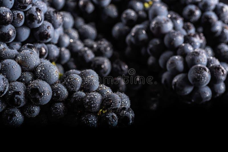 Ciemna wiązka winogrono w niskim świetle na czarnym odosobnionym tle, makro- strzał, woda opuszcza zdjęcia stock